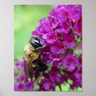 Hungry Bee Print