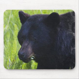 Hungry Black Bear Mouse Pad