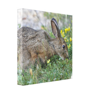 Hungry Bunny Canvas Print