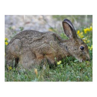 Hungry Bunny Postcard