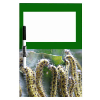 Hungry Cabbage White Caterpillar Memo Board Dry-Erase Whiteboards