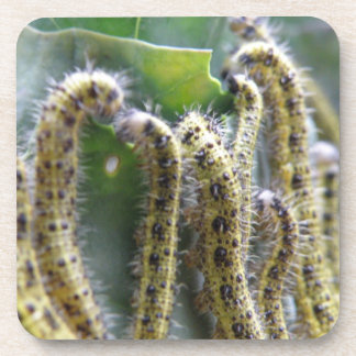 Hungry Cabbage White Caterpillars Cork Coaster