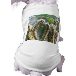 Hungry cabbage White caterpillars Dog Clothing