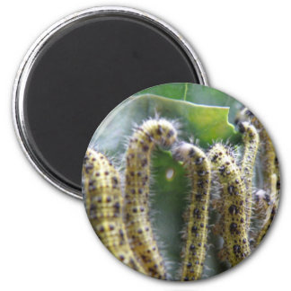 Hungry Cabbage White caterpillars Magnet