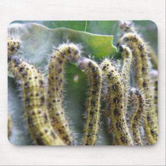 Hungry Cabbage White Caterpillars Mousepad