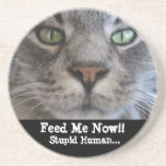 Hungry Cat Beverage Coaster