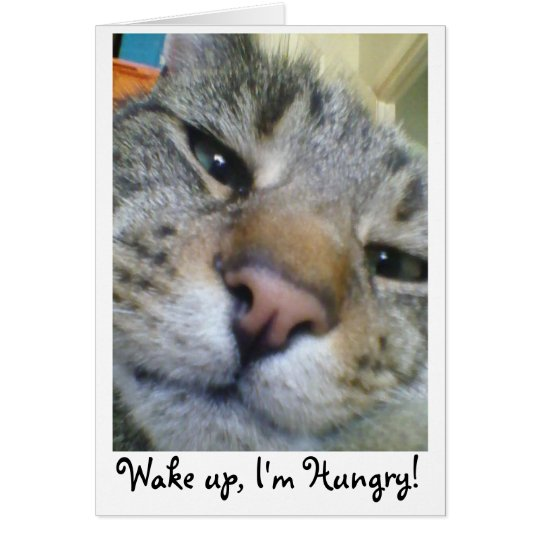 Hungry Cat Funny Greeting/Birthday Card