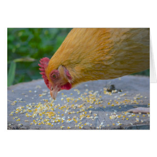 Hungry Chicken Notecard