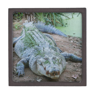 Hungry Crocodile Water Giftbox Gift Box