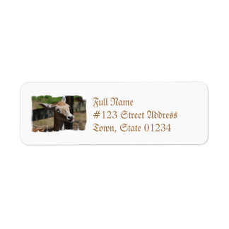Hungry Deer Address Labels