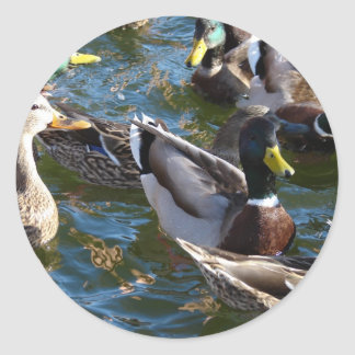 Hungry Ducks Stickers