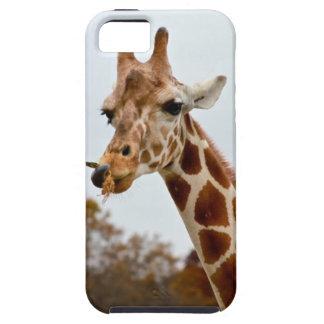 Hungry Giraffe Wild Animals Photo iPhone SE/5/5s Case