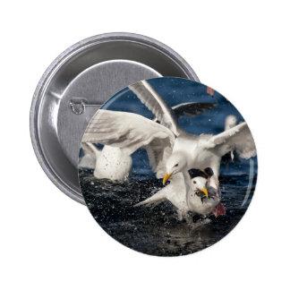 Hungry gulls pinback button