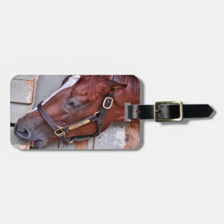 Hungry Horse Luggage Tag