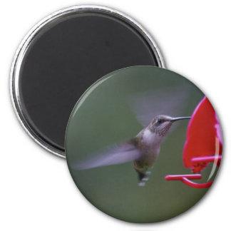 Hungry Hummingbird Magnet