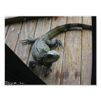 Hungry Iguana (cleanup) Poster