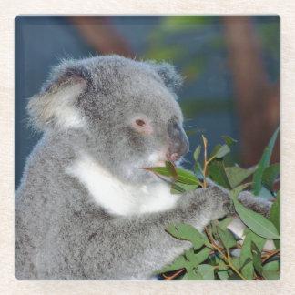 Hungry Koala Glass Coaster
