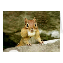 Hungry Little Chipmunk Card
