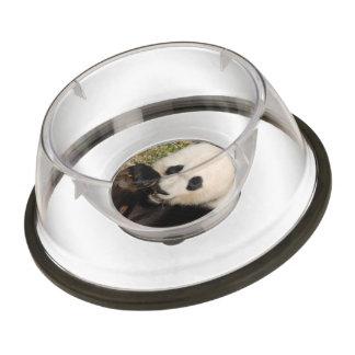 Hungry Panda Pet Bowl