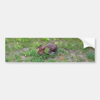 Hungry Rabbit on Lawn Bumper Sticker