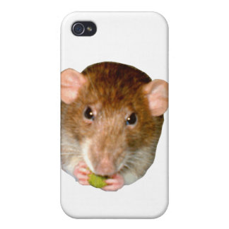 Hungry Rat  iPhone 4/4S Cases
