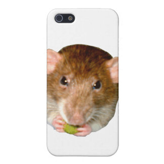 Hungry Rat  iPhone SE/5/5s Case