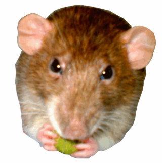 Hungry Rat Photo Sculpture