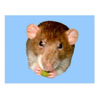Hungry Rat Postcard
