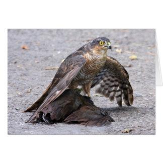 Hungry Sparrowhawk Card