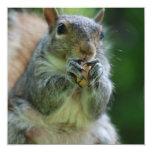 Hungry Squirrel Invitations