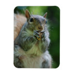 Hungry Squirrel Magnet Vinyl Magnet