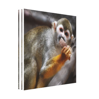 Hungry Squirrel Monkey Canvas Print
