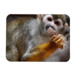 Hungry Squirrel Monkey Premium Magnet Rectangle Magnets