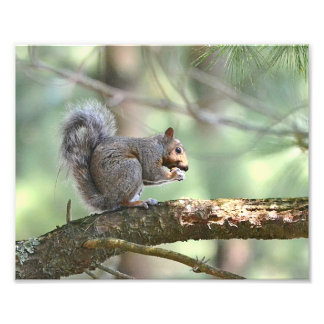 Hungry Squirrel Photo Print