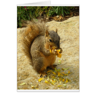 Hungry Squirrel Products Card