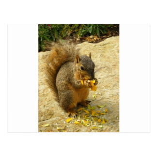 Hungry Squirrel Products Postcard