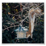 Hungry squirrel stealing food from the bird feeder poster