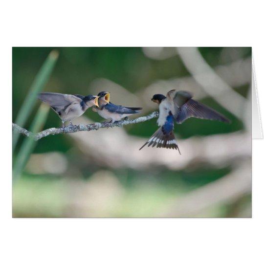 Hungry Tree Swallows Card