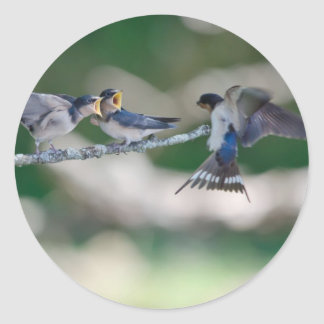 Hungry Tree Swallows Classic Round Sticker