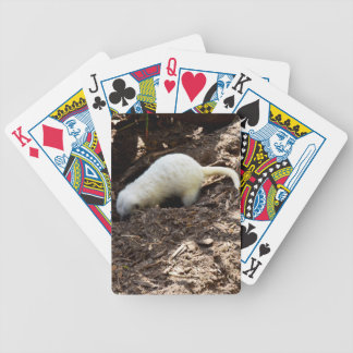 Hungry White Meerkat, Bicycle Playing Cards