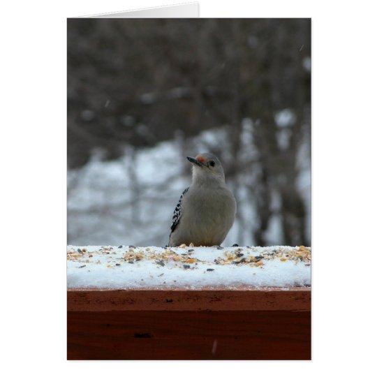 Hungry Woodpecker Card