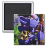 Hunny Bee 2 Inch Square Magnet