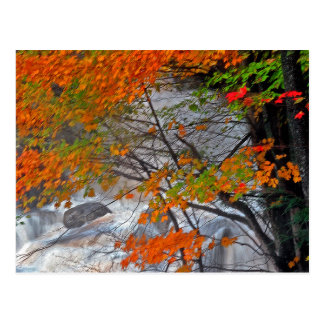 Hunter Mountain  Stream Postcard