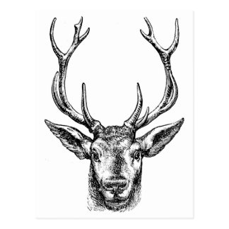 Hunters Buck Postcard
