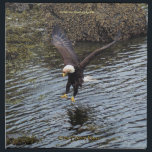 """Hunting Bald Eagle Wildlife-theme Dining Napkins<br><div class=""""desc"""">Bald Eagle Photo by Skye Ryan-Evans &#169;  This powerful Eagle attempts to catch an unlucky Red Herring.  A gorgeous wildlife image for this high quality Dining serviette.</div>"""