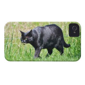 Hunting Black Cat - iPhone 4 Case
