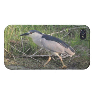 Hunting Black-Crowned Night-Heron 4/4s Spec iPhone 4/4S Cover