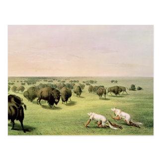 Hunting Buffalo Camouflaged Postcard