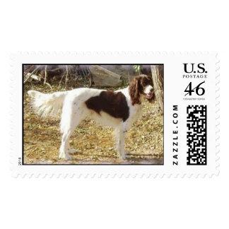 Hunting Dog Postage