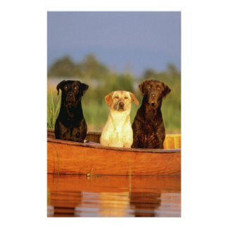 hunting dogs essay In the earliest of time, duck hunting was essential indian tribes would use canoes and dogs to catch ducks to feed their families they would leave early in the morning to beat the sunrise and get out on the water.